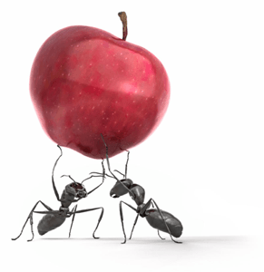 ants_apple.png